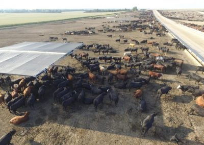 Farm Photo 5