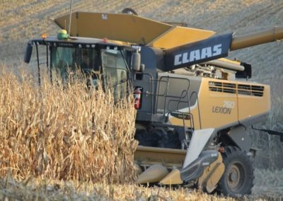 Harvest Photo 4